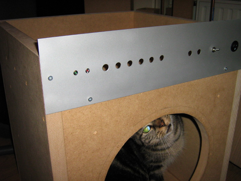 Cat in subwoofer box